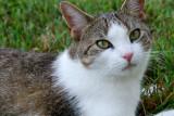 cat-14.jpg