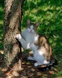 cat-19.jpg