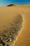 Bones In The Desert