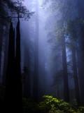 Spotlight On Rhododendron