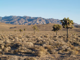 Nevada South