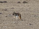 Crossing a Barren Valley Near Rachel, Nevada