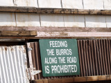 No Feeding!