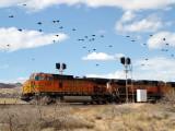 Passing By Hackberry, Arizona