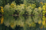 Lake Crescent Reflected