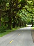 Hoh Road