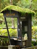 Rain Forrest Hotline