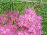 Wasp Farm 2