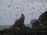 Wind Gulls