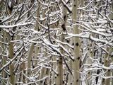 White on Winter White
