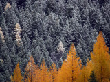 The Turn of Seasons