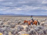 Jackaroo on the Oregon Outback