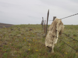 Coyote Beware - Death on the Oregon Outback