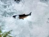 Salmon Cascades 1