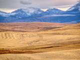 Rocky Mountain Wheat
