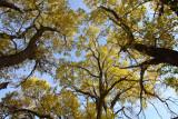 Big Cottonwoods