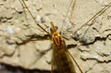 Some bug