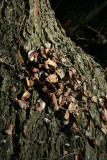 Midden Pile (Close up)