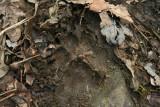 Domestic Dog in Soft Mud