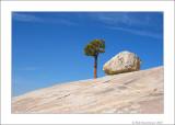 Yosemite  & Bodie
