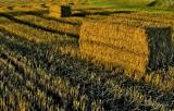 farming in autumn, sweden