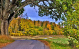 autumn trees outside norrtelje