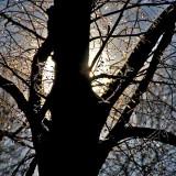 backlight on tree