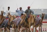 Training the Racing Camels Dubai.JPG