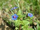 Desert Flowers 1.JPG