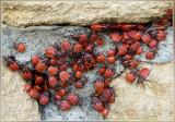Wantsen en cicaden