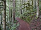 Hiking Trail Oregon