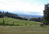 Picnic Area Amity Vineyards