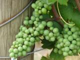 Heavy Vines