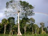 Harpy nest & rainbow