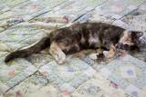 Cat Nappin Bumster.jpg