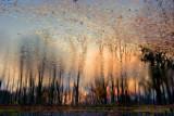 Sunset-Pond.jpg
