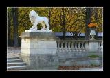 Lion d'automne - Paris