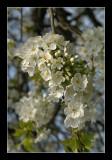 Blooming de Luxe !