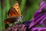 d200_butterflys