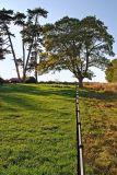 Trees and railings, Kingsdon, Somerset