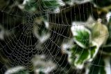 You just gotta see this web!!!