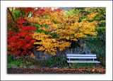 Bench and trees, Montreux
