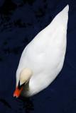 Swan! Montreux