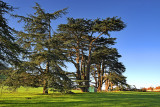 Cedars of Montacute (2920)