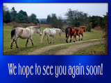 'See you again soon' slide from the New Forest series