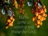 'We've come to worship...' slide from the Daffodils series