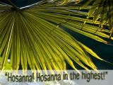 'Hosanna!' slide from the Abbotsbury Gardens series