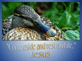 'Come aside and rest awhile' slide from the Hestercombe Gardens series