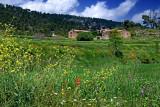 Wild flowers and farmhouse