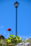 Flower and lamp-post, Casares